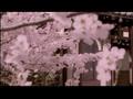 Morning Musume - Sakura gumi - Sakura Mankai