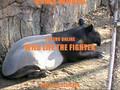 Wild Life, Malayan Tapir