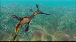 El Pez alga