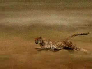 Out run a Leopard