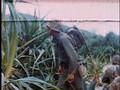 Desination Battlefield Okinawa