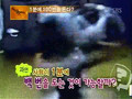 Dong Bang Shin Ki - 100 Times Per Minute (2007-04-27) [Dopamine]