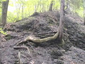 Taughannock State Park video: out of the river bed, back onto the trail, and back into the stream