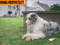 My dog lose control