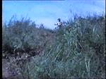 Dreitausendeins das Zeitalter der Affen  (1987)