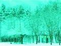Winter Sonata - Sonata de Invierno