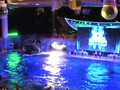 Shamu Rocks at SeaWorld Orlando