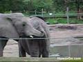 An elephant . . .