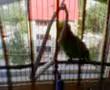 coco se joaca cu leaganul