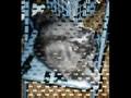 Varla Cat