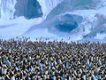 Happy Feet - Emperor Penguins Movie Teaser HDTV