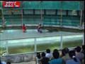 Crocodile attacks man