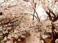 [J-Drama]Gokusen Ep.1 1/3
