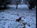 Puppy and ferret play in snow
