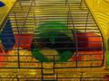 pikachu on the wheel