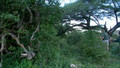Ray Mears Bushcraft 1x05 - Africa Safari