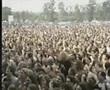 Kyuss live @ Bizarre Festival 1995