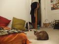 Fan-assisted Cat2