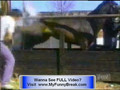 Extreme FUNNY Animal Videos - animals funny clips