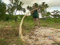 Ray Mears World of Survival 1x04 - Savaii, Western Samoa