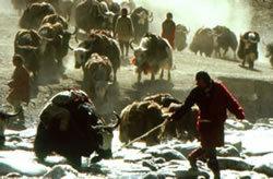 caravan (himalaya).avi