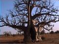 Sous le soleil du Sénégal