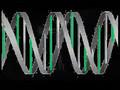 Misao's Irken DNA Metamorphsis
