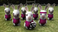 Raving Rabbits-Rugby-