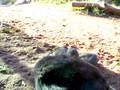 Baby Gorilla - San Diego Zoo