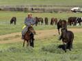 La Mongolie du Gobi à l'Altaï