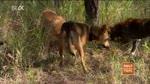 15 Wer ist der oberste Dingo?