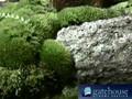 A Garden of Moss