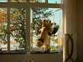 Optus Ad - Giraffe.avi