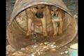 Animal Shelter Movie