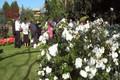 Helen & Simon - the garden reception.avi.mpg