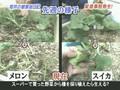 D No Arashi : Ohno Azafata