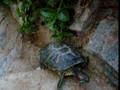 Alguien vió a una tortuga escalar?