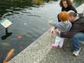 Koi pond at the US Arboretum