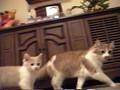 daisy and dusty ( cats )