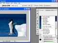 Introduction to Photoshop CS3 Interface