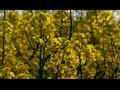 Albert Hofmann is death (29th april 2008) - Therefore: Lysergaciddiethylamid
