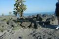 Galapagos Islands, South Plaza, Katharine's slideshow of South Plaza Island