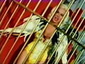 """Joi Lansing : """"Trapped in the Web of Love"""""""