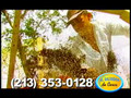 El Sombro Azul Salsa Clave-H.264 800Kbps Streaming.mov