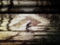 Le Portrait de Petit Cossette - Ulver