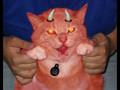 Wierd Kitty Video