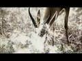 Gazelle Versus Lion