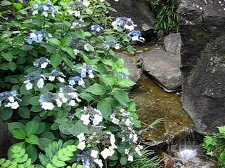 六本木ヒルズ 毛利庭園 2
