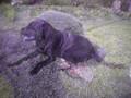 Killerdog <3