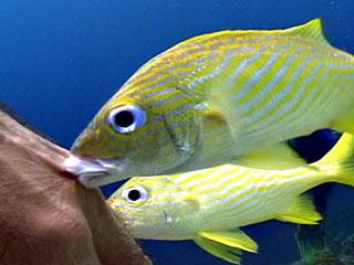 Yellow Submarine: Blennylips Bonaire Video Dive Log for 2005-01-09